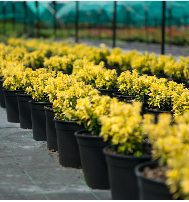 Più di 1000 piante a catalogo
