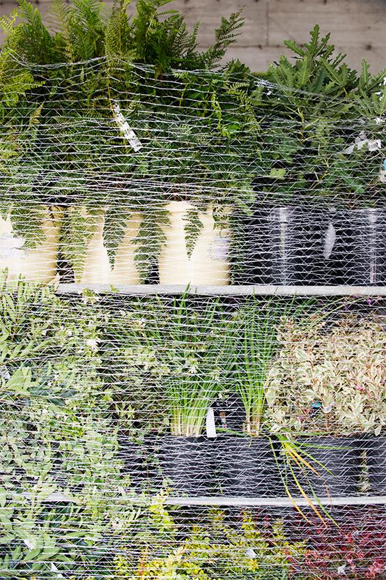 Spedizione piante attenta e veloce